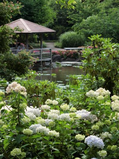 2021年 5月 神奈川・鶴見 穴場のお散歩コースみーつけた! 馬場花木園