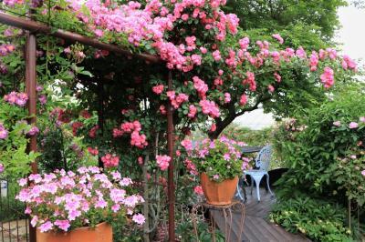 オープンガーデンへのお誘いその2     小雨降るバラ屋敷 YasaRoseGardenさんでバラに埋まる♪