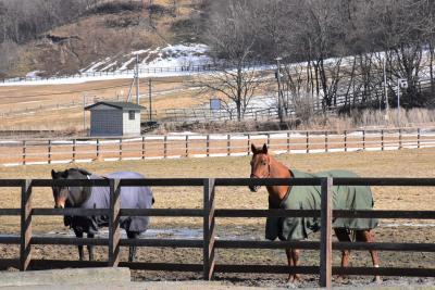 馬が駆けまわる日高本線「絵笛駅」、馬とふれあえる「優駿ビレッジ」~競争馬の産地浦河~(北海道)