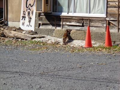 猫と寺社探し【栃木(鑁阿寺と足利学校・Bannaji & Ashikaga gakko)編󠄃】