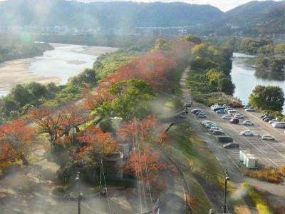 京都 八幡 背割堤(Sewari-tei Embankment, Yawata, Kyoto, JP)