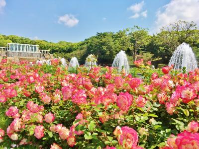 バラに包まれた須磨離宮公園~須磨寺&須磨海浜水族園へ♪