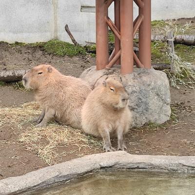 GWは2泊3日で北海道縦断 その③旭川動物園&ちょびっと札幌で寄り道