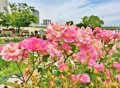 大阪名所の庭園&公園巡り♪