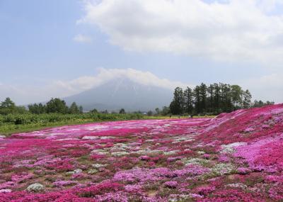 羊蹄山と芝桜の写真を撮りに行ってきた