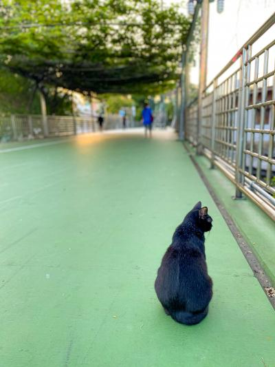 朝の散歩でLumphini-Benjakitti Park Green Mileへ