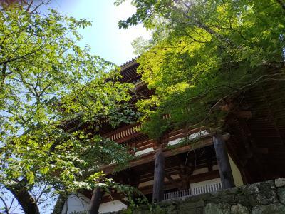 吉野山へ!
