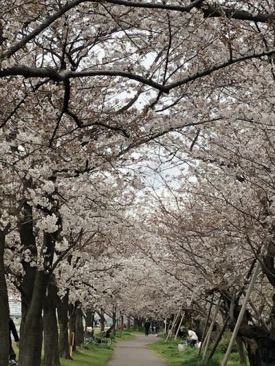雑色でランチ&多摩川で花見