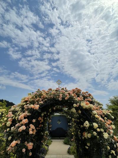 中之条ガーデンズ、薔薇満開~♪そしてエーデルワイスの咲く丘へ。