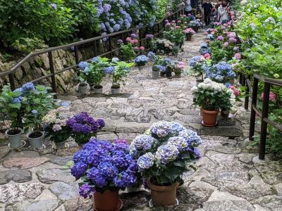紫陽花を見に花の御寺長谷寺へ