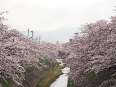 2021年 るなさんと行く春爛漫の奈良&京都【2】佐保川の桜並木とお寺巡り&くるみの木でランチ