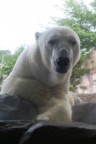 八木山動物公園は動物との距離が近いです