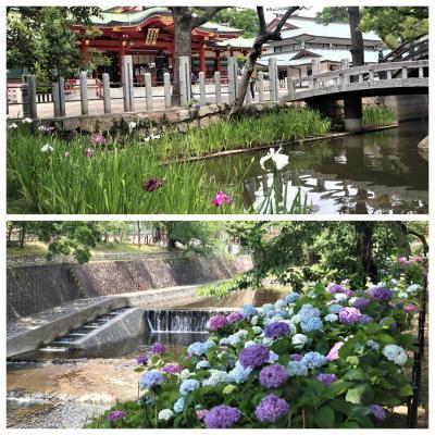 今日は足を伸ばして。。西宮神社から夙川公園**紫陽花散歩**