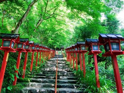 青もみじと苔の魅力にようやく気付いた2021年☆ 新緑を求めて公共交通機関で巡る京都編