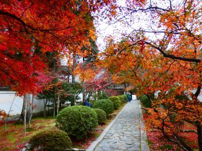 京都 京田辺 一休寺参道沿い(Ikkyuji Temple Main Approach, Kyotanabe, Kyoto, JP)