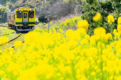 春のいすみ鉄道を撮る!乗る!旅