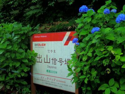 シーズン早めの箱根登山鉄道の紫陽花ウォッチの温泉旅行