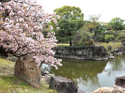 春の訪れ、桜とグルメ♪二条城の桜~「Kyo gastronomy KOZO」&「EL BOGAVANTE 346」&「本日の」