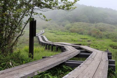 梅雨入り前の井戸湿原へ