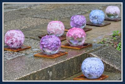 雨のなか、ガラスボールのアジサイに会いに般若寺へ♪