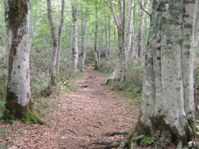 伝説の黒姫山でリフレッシュ、ブナ森林浴は最高!