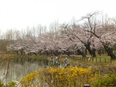 太田ヶ谷沼・・それでも春はやってきた🌸