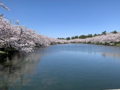 弘前城の桜を見に青森へ