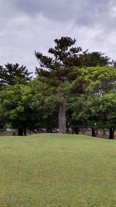 6月の奈良公園