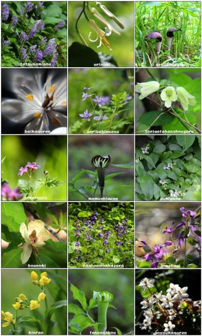 ◆福島・四季・彩々/ Part97~春の野の花巡り⑤(晩春の候)