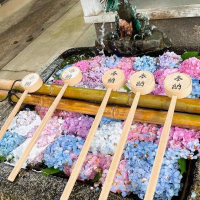 京都藤森神社で紫陽花苑を見て ランチバイキング♪