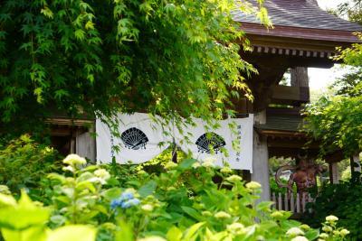 延期に次ぐ延期の秋田。男鹿のあじさい寺をレンタサイクル出回りました。2