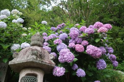 紫陽花の長谷寺と久米寺と周辺の神社