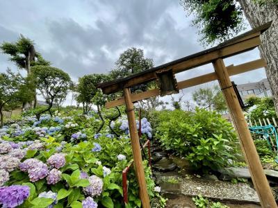 2021年6月 白山神社で紫陽花散歩