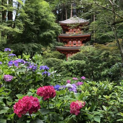 紫陽花咲くころ、木津川市のお寺の日本の歴史的財産を見て回りました。