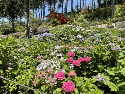 紫陽花を見に京都へ