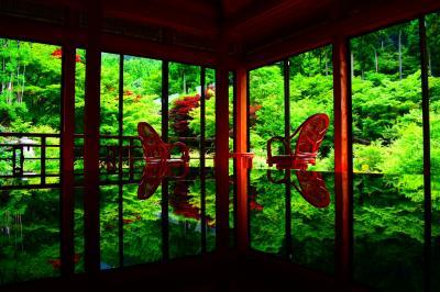 紅葉に勝るとも劣らない新緑の絶景♪『環境芸術の森』