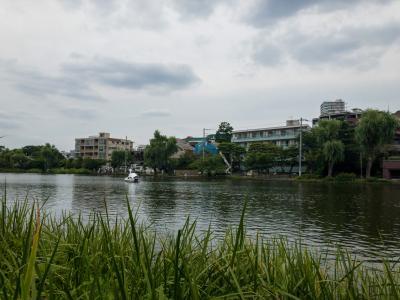 練馬区民のオアシス「都立石神井公園」へ・・・