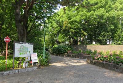 2021初夏、鶴舞公園のあじさい散歩道(1/5):6月23日(1):柏葉アジサイ、黒軸アジサイ、西洋アジサイ、額アジサイ