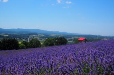 真夏の日曜日、花と山を見に行こう! in 上富良野町