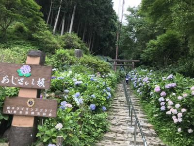 栃木 あじさい祭り 大平山神社