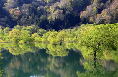 ◆幽玄の水鏡~白川ダム湖の水没林 ②