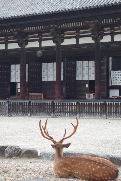 20210628-2 奈良 お昼ごはんの後で、ちょっと興福寺の境内を散歩させていただく