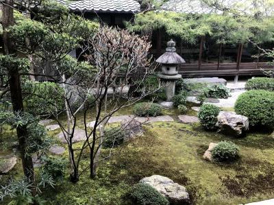 ほんわりあったかい京都へと(Part 1. 退蔵院、落ち着きすぎん?)