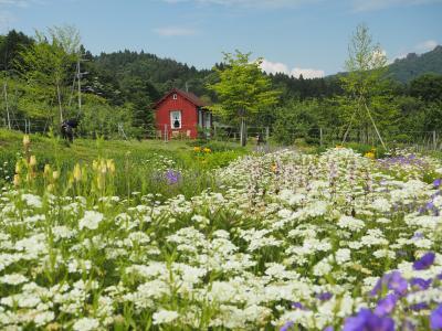 中之条ガーデンズ、湯の丸高原、花に埋もれた嬬恋キャンプ 後編