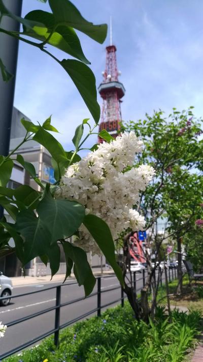 初夏の札幌歩き