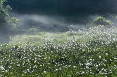 朝霧漂うワタスゲの湿原 ~駒止湿原~