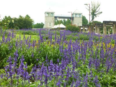 ぐんまフラワーパーク・・貸し切り状態で花を楽しむ♪