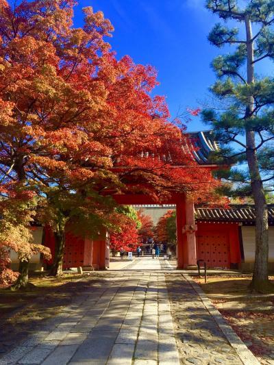 ◆ 赤く染められた真如堂(真正極楽寺) ◆