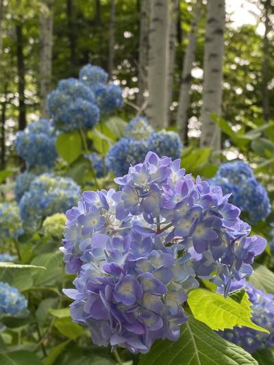 豊平公園で花を愛でた日