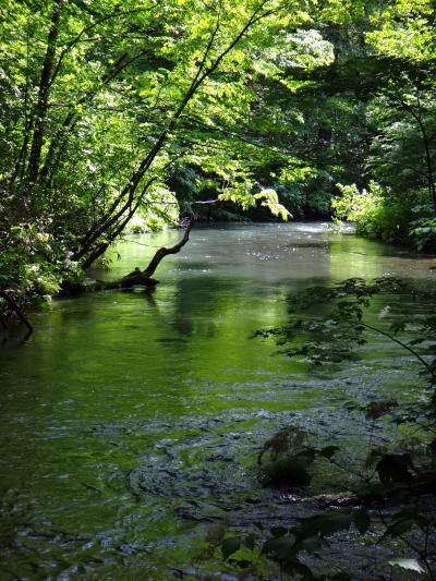 日本の北の果てまで行ってやるぅ 15  十和田湖畔と奥入瀬渓流、何回も行っても飽きない自然